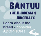 BANTUU pro dog adoption instead of going to breeders