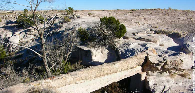 A petrified tree in Petrified Forest National Park