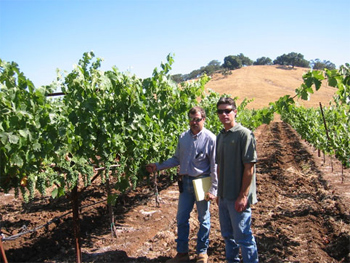 CLC's winemaker and vineyard manager check out the 2003 crop