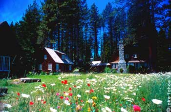 Wildflowers in bloom at the Tallac historic site at South Lake Tahoe