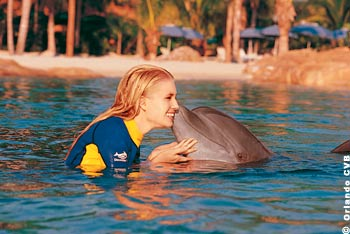 Swimming with Dolphins in Orlando's Discovery Cove