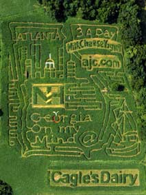 Corn Maize at Cagle's Dairy