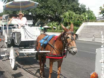 Horse Carriage ride trough the French quarter