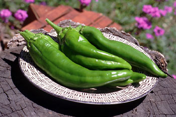 Green Chile is a favorite among native New Mexicans