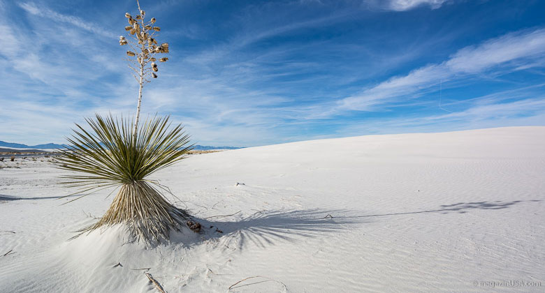 Die weissen Dünen des White Sands National Monument.