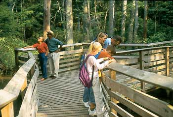 First Landing State Park contains more than 19 miles of interpretive hiking trails through beach, back dunes, upland forest, tidal marsh and cypress swamp.