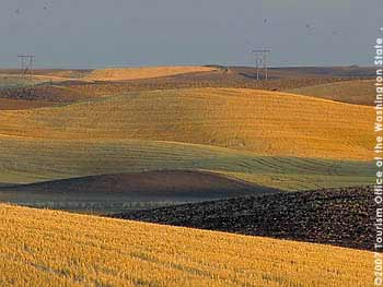 Cultivated Field Patterns in the Palouse Countryside near Pullman