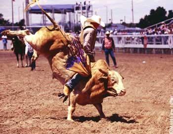 Rodeo thrills at Cheyenne Frontier Days